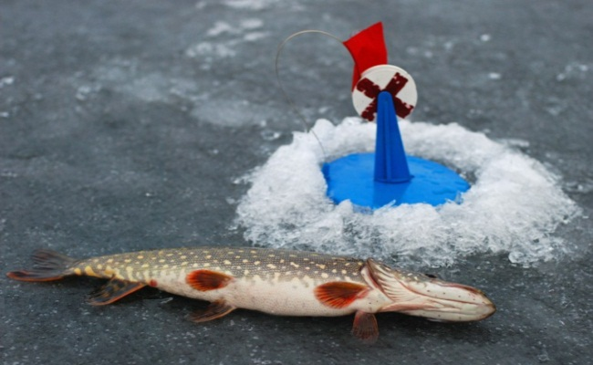 ловля щуки зимой на жерлицу