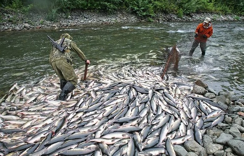 Правила любительского и спортивного рыболовства в водоемах Красноярского края, республик Тува и Хакассия