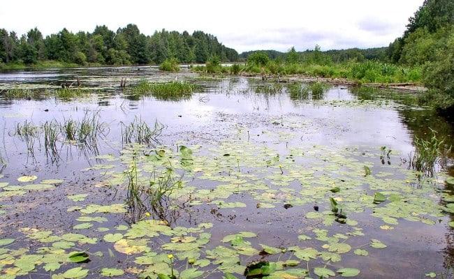 водная растительность может о многом сказать рыболову