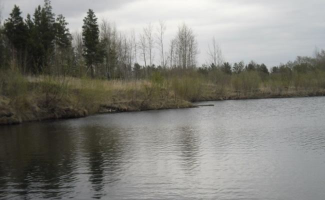 чистый от растительности водоем но с обитающим карасем
