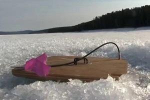 жерлица по первому льду