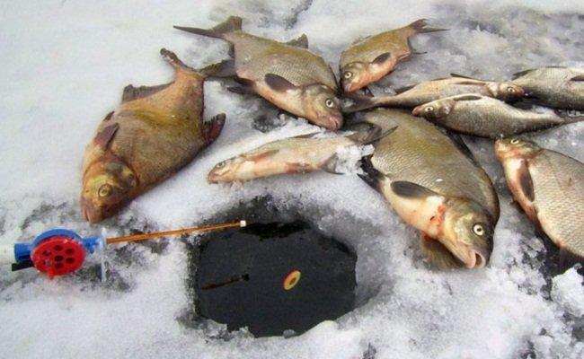ловля леща зимой на поплавок из лунки