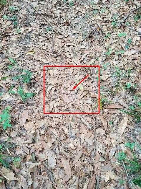 змея на фоне листвы отгадка