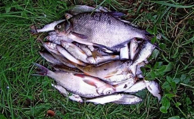 как сохранить рыбу на рыбалке в жару несколько дней