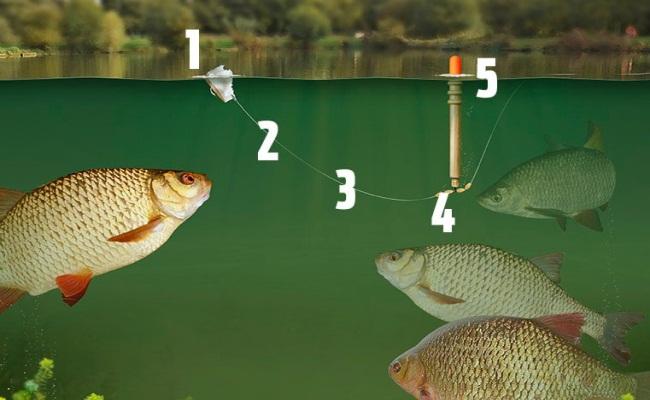 правильно собранная снасть для ловли рыбы на хлеб