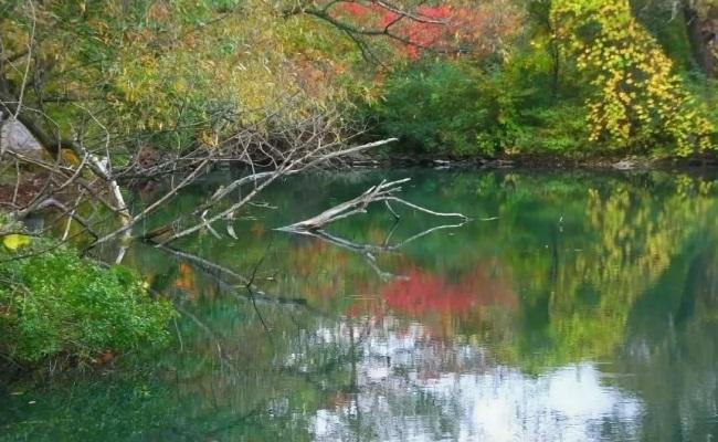 речной коряжник