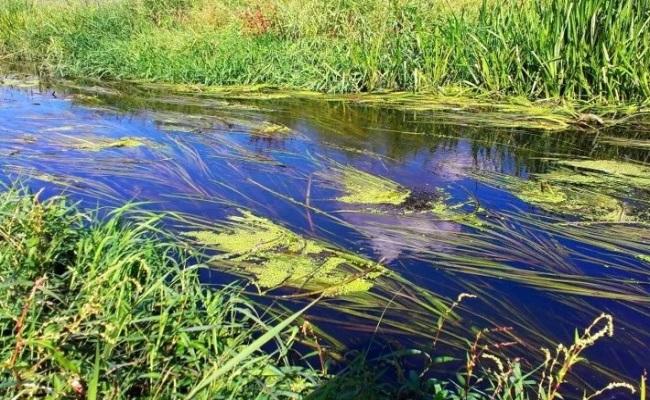 заросли травы на течении