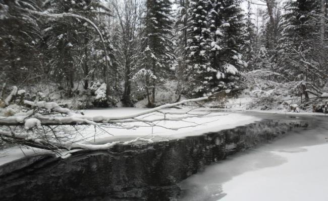 устье притока ангары где можно найти налима