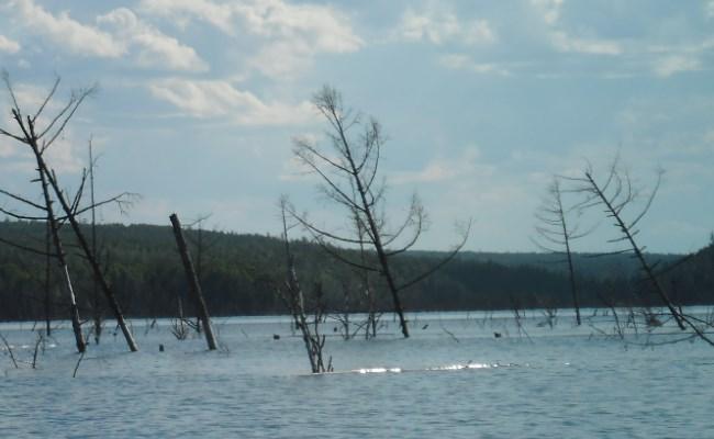 затопленный лес бвх