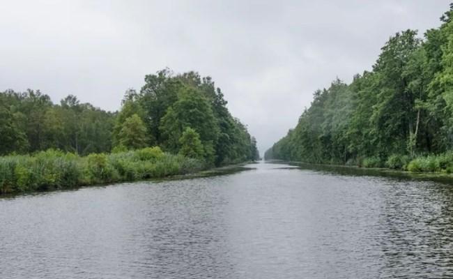 места обитания плотвы