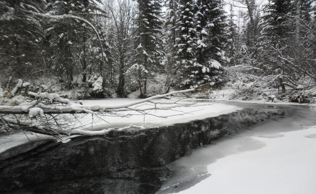 сыромолотиха зимой