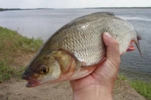 язь рыба моей мечты