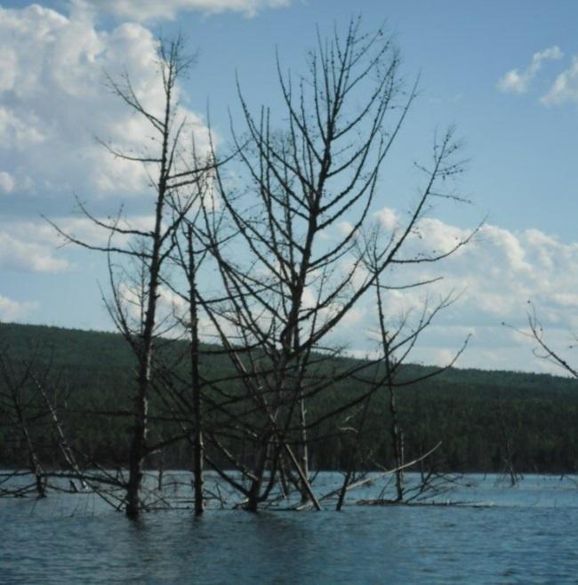 затопленный лес дом для щуки